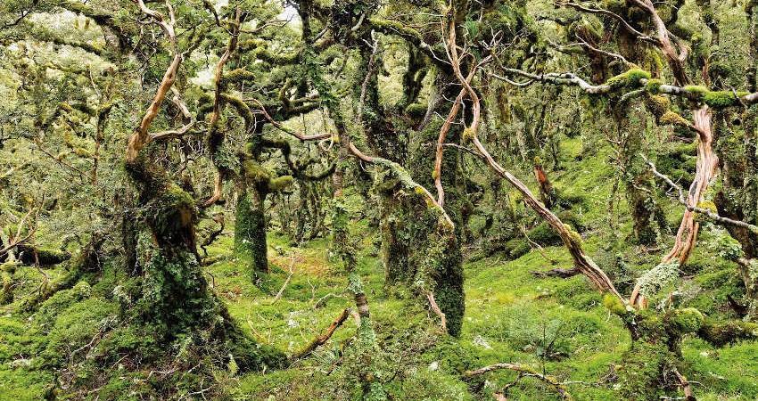 اسرار آمیزترین جنگل های دنیا