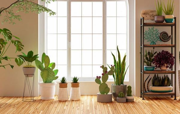 20 گیاه آپارتمانی برای تصفیه کردن هوای خانه
