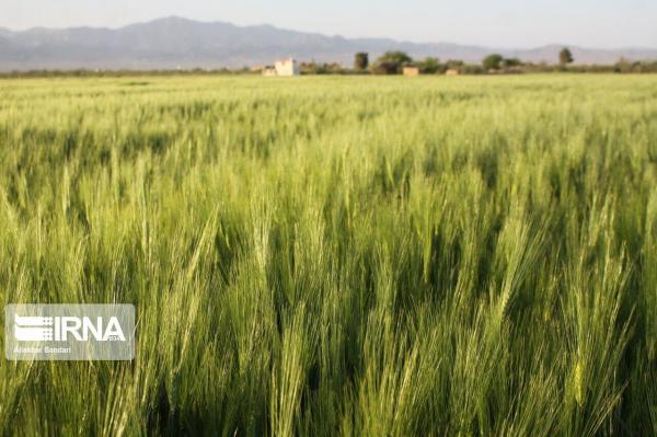خبرنگاران یزدی ها پارسال 160 هزار میلیارد ریال محصول کشاورزی فراوری کردند