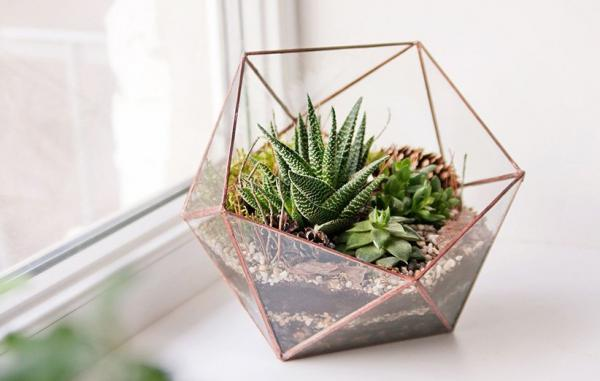 10 گیاه آپارتمانی مقاوم که در تراریوم خوب رشد می کنند (و آموزش ساخت تراریوم)