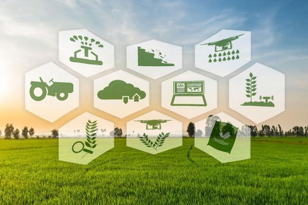 فناوری در خدمت زندگی ، کشاورزی دیجیتال با تلاش 100 شرکت دانش بنیان توسعه یافت